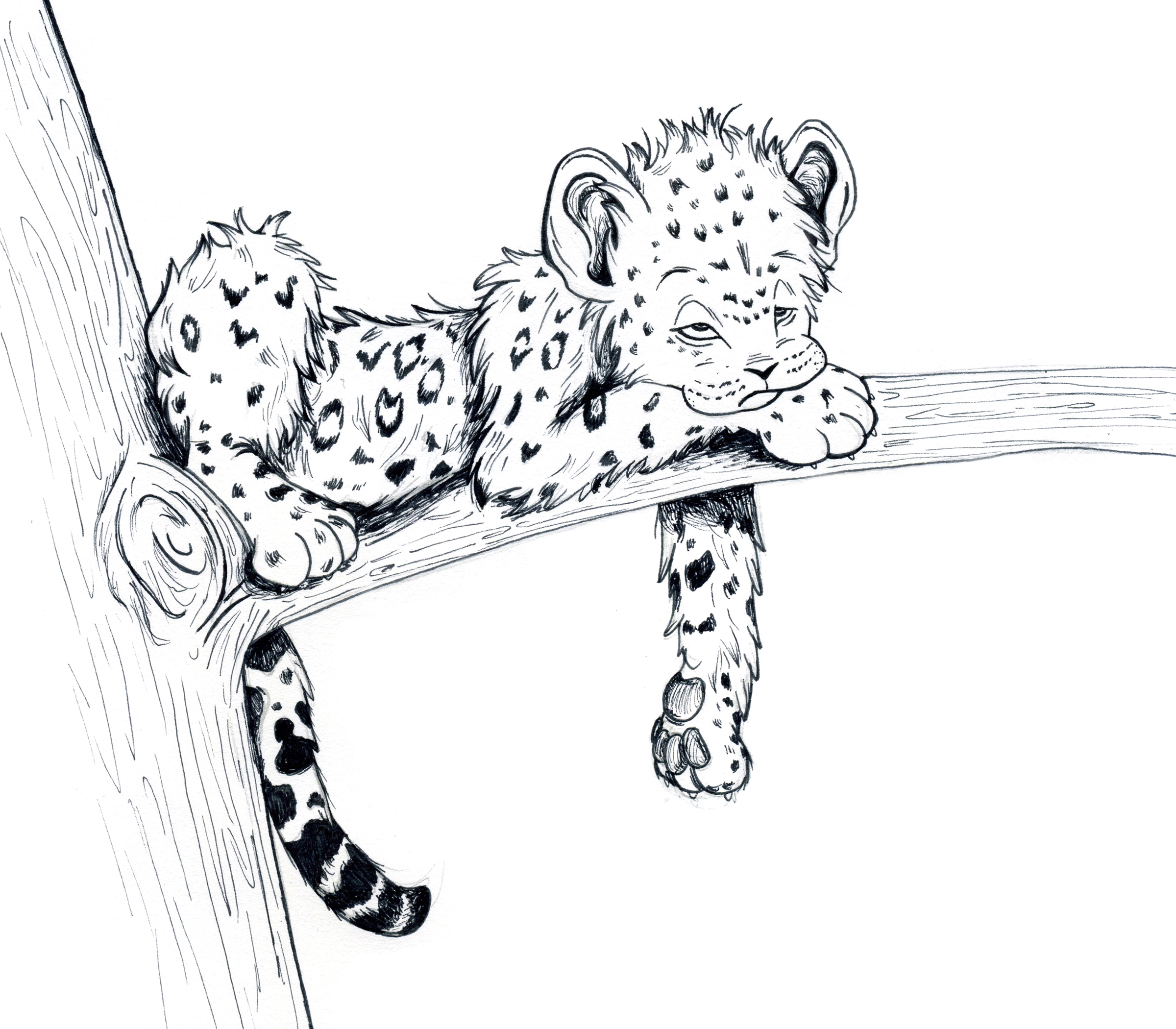 Free Coloring Pages Of Leopard Baby